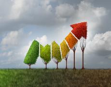 An image representing an upward trajectory using trees