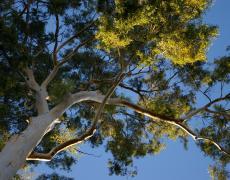 A tree from below