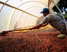 A man named Rubiel Rios Andrade dries cacao on his farm in township of La Paz, Colombia